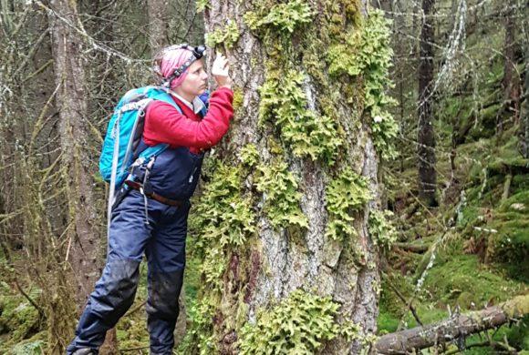 Naturmangfold i skog