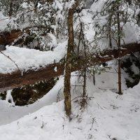 Bli med på tur i fin skog og hjelp oss med å kartlegge sjeldne arter