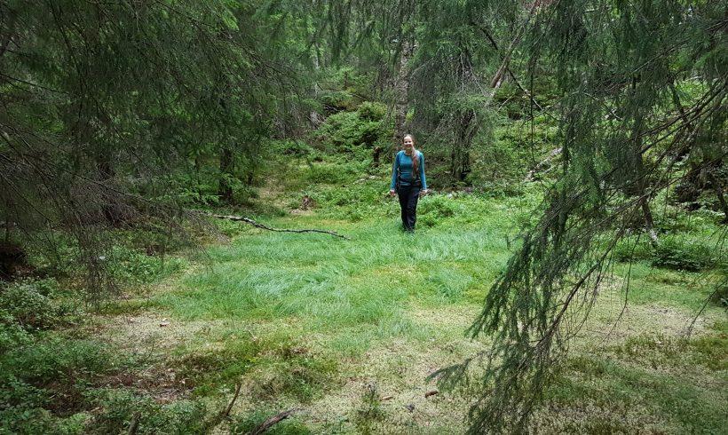 Monark kartlegger skogens sjeldne skatter