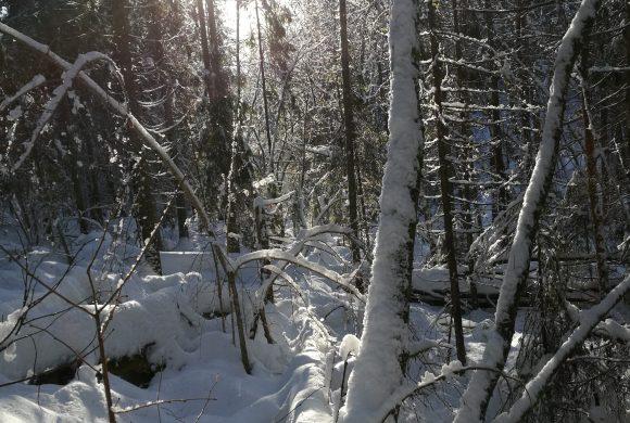 Monark finner truede arter i Bærum