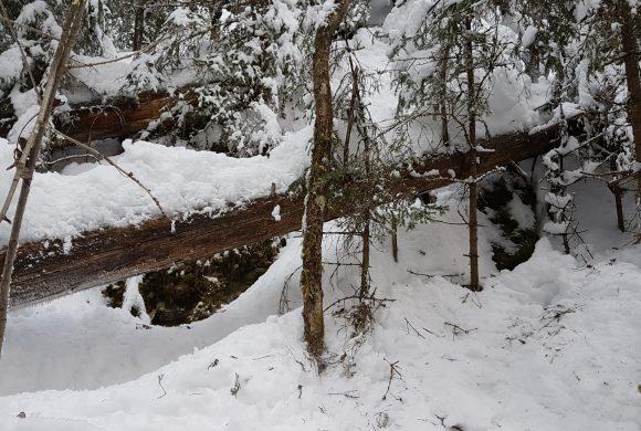 Vinterkartlegging av sjeldne vedboende arter