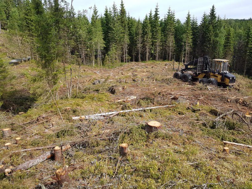 Monark finner truede arter i skog godkjent for flatehogst – 2018