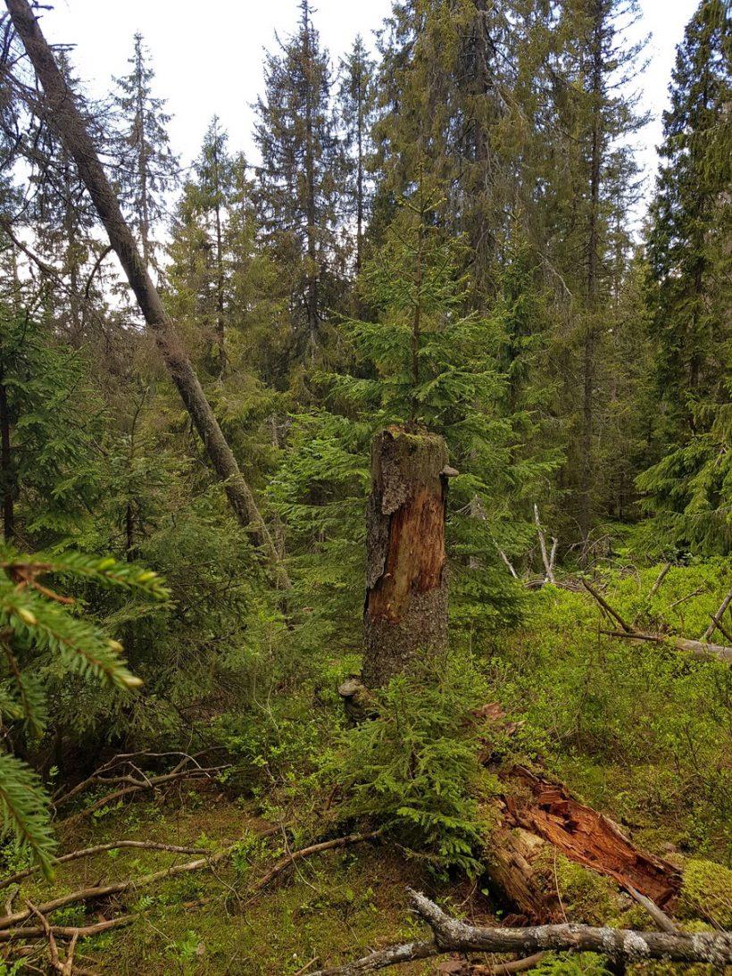 Skogoppsyn overser naturverdier i Bærum